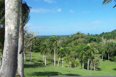 Sosua, Puerto Plata, ,Investments/Land/Commercial,For Sale,1106