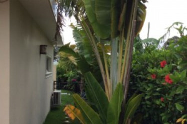 3 bedrooms in the Dominican Republic, Life in Paradise, Tropical dreaming, Never do winter again